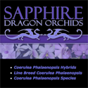 Sapphire Dragon Orchids